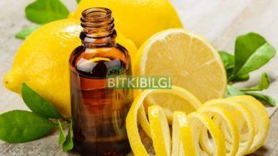Limon Kabuğu Yağı